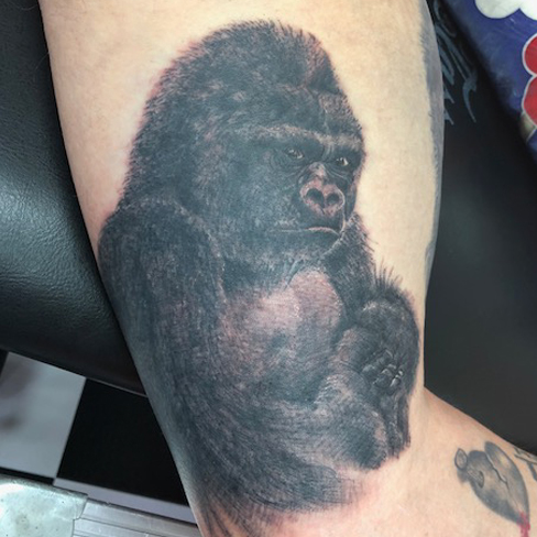 realistic gorilla, gorilla, black grey, Tattoo, Best Tattoo, Colchester, Essex, Tattoo art, Tattoo Artist, Tattoos, Tattoo design, Top Tattoo, Black & grey Tattoo, reds tattoo, sonya trusty, essex tattoo, colchester, realism tattoo