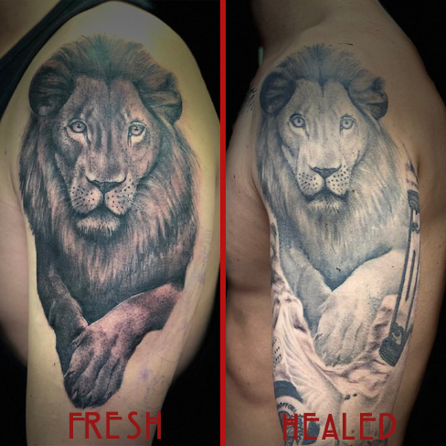 Tattoo, Best Tattoo, Colchester, Essex, Tattoo art, Tattoo Artist, Tattoos, Tattoo design, Top Tattoo, Black & grey Tattoo, reds tattoo, sonya trusty, essex tattoo, colchester, lion tattoo, realistic lion tattoo, fresh tattoo, healed tattoo, fresh vs healed